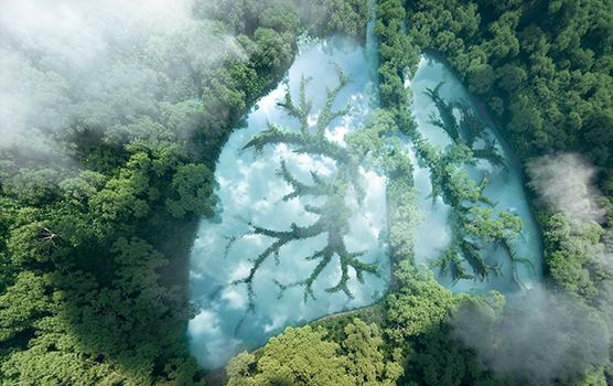polmoni natura