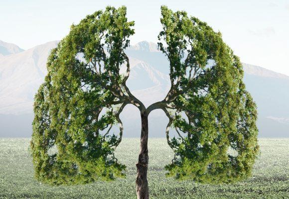 polmoni albero- respiro